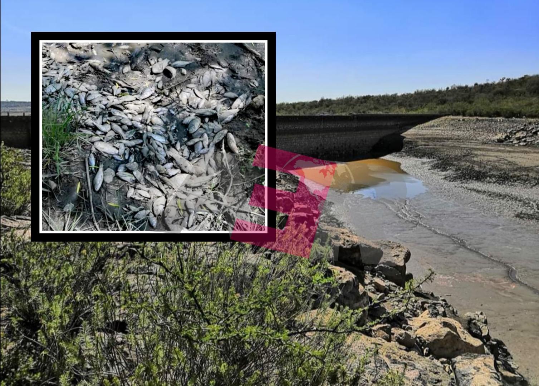 """Miles de peces mueren por desfogue de la Presa """"Ave María"""". 1"""